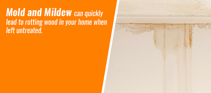 Mold and mildew can quickly lead to rotting wood in your home when left untreated.